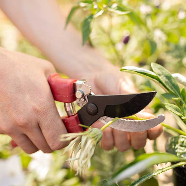 SHARPEN-ONE-HANDED-GARDEN-TOOLS